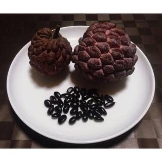 レッドアテス(赤釈迦頭)の種子20粒(フルーツ)