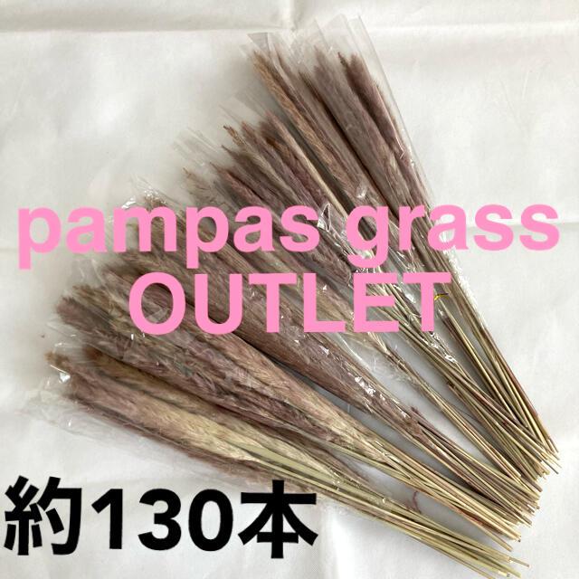 【OUTLET】パンパスグラス 130本以上 大量 訳あり 訳有り テールリード ハンドメイドのフラワー/ガーデン(ドライフラワー)の商品写真