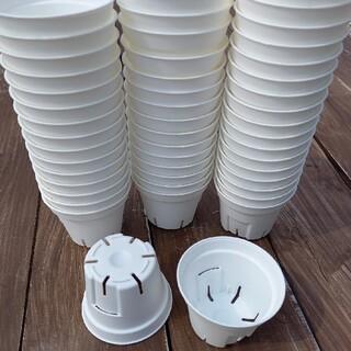 6cm スリット鉢 白 プラ鉢