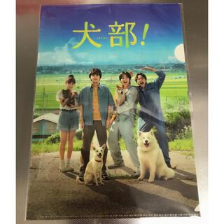 犬部 クリアファイル 1枚 ✨新品・未使用・未開封✨ 非売品✨
