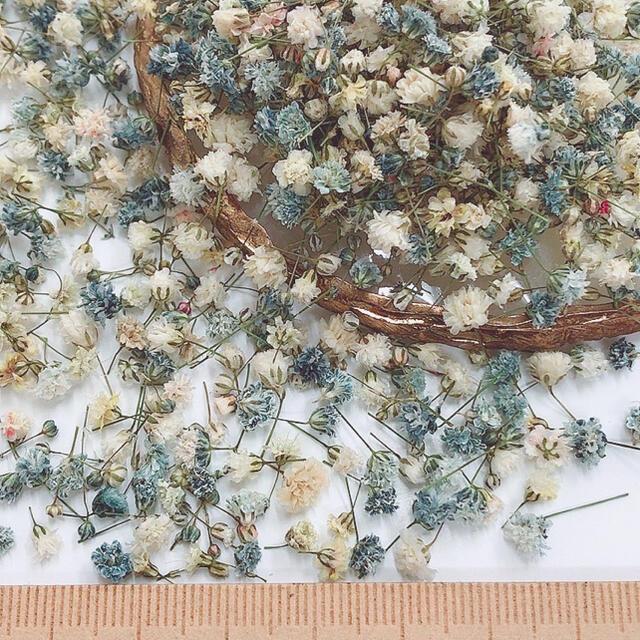かすみ草 ドライフラワー 蕾開きかけモノトーンミックス ハンドメイドのフラワー/ガーデン(ドライフラワー)の商品写真