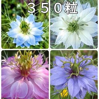🌺花の種 ニゲラ