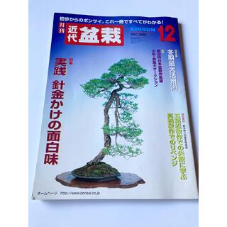 月刊 近代盆栽 2004 12月(専門誌)
