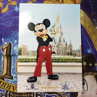 ディズニー(Disney)のフォトファン  ディズニー ミッキー(印刷物)