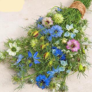 ニゲラの花色ミックスの種30粒(プランター)