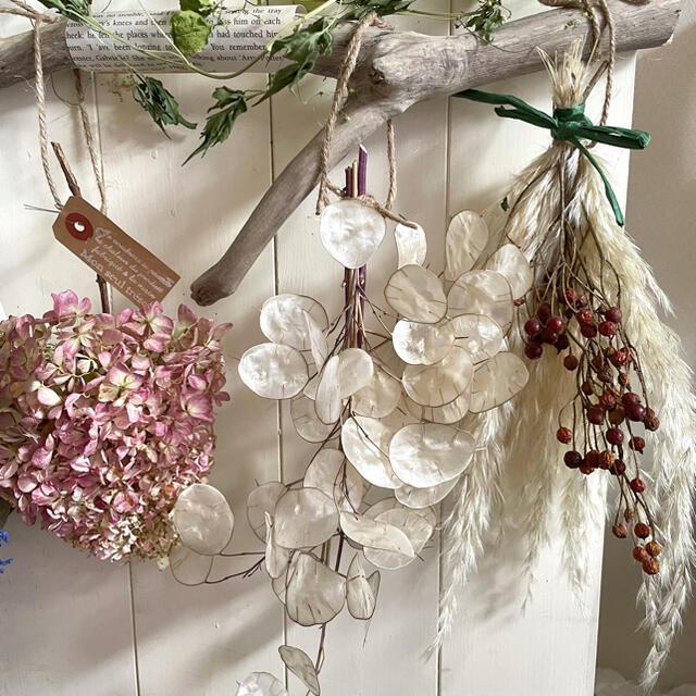 ミナヅキとルナリアのスタイリッシュな壁掛け ハンドメイドのフラワー/ガーデン(ドライフラワー)の商品写真