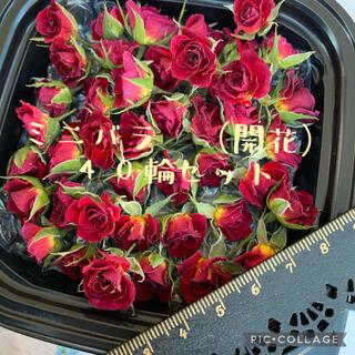 大特価!ミニ薔薇(開花)35輪セット+おまけ5輪付き 計40輪!★ドライフラワー