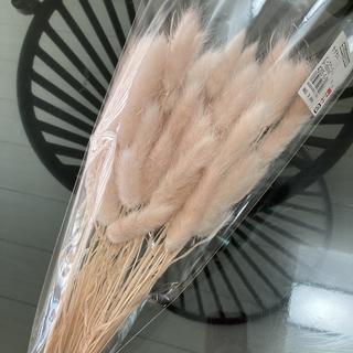 ラグラス ❁ ピンクベージュ 1袋全量  ドライフラワー 花材 花材詰め合わせ(ドライフラワー)