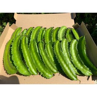 無農薬 無肥料 自然栽培 四角豆 ネコポス 箱いっぱい