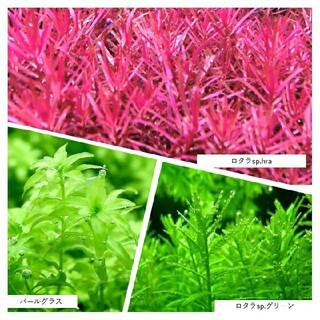 水草10種セット