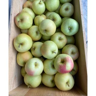青森県産りんご 葉とらずトキ ※小さいサイズ4キロ以上