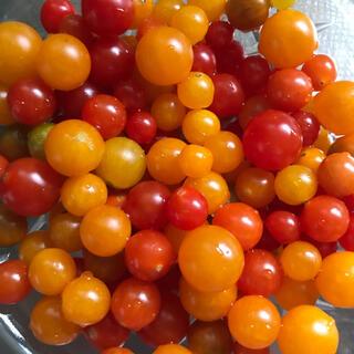 マイクロトマトの種、ミニトマトあいこの種