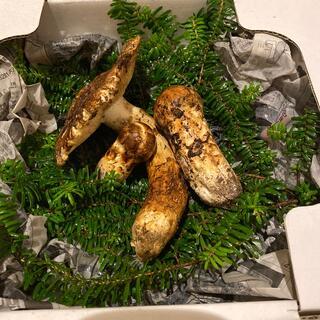 信州木曽産 松茸 ‼️特価品‼️