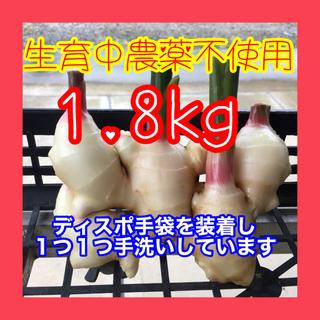 新生姜 箱込み1.8kg  減農薬栽培 鹿児島産(野菜)