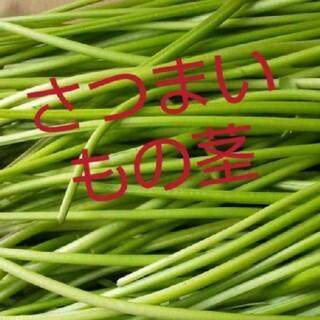 さつまいもの茎宅急便コンパクトに入るだけ(野菜)