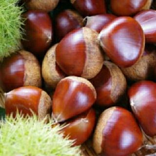 生栗🌰 約900g 無農薬 大粒 三重県産(野菜)
