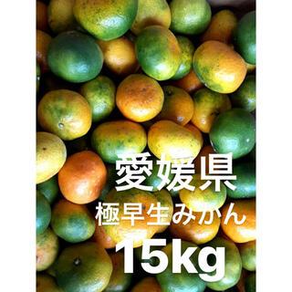 愛媛県産 極早生みかん 15kg(フルーツ)