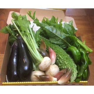 野菜詰め合わせ 小蕪入り コンパクトBOX