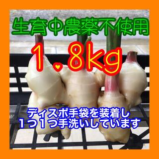 新生姜 箱込み1.8kg  減農薬栽培(野菜)