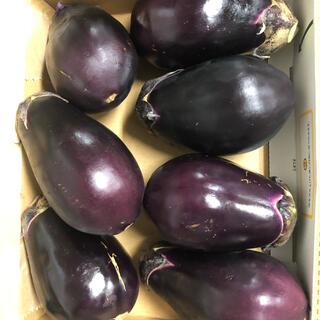 大阪泉州の水茄子7個入り(野菜)