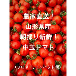 農家直送 山形県産 新鮮 朝採り中玉トマト(野菜)