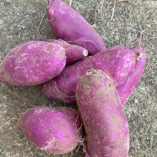 パープルスイート紫芋 3kg 無農薬(野菜)