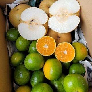 愛媛県産 新高梨 極早生みかん セット 箱込み約3kg 柑橘 フルーツ ミカン