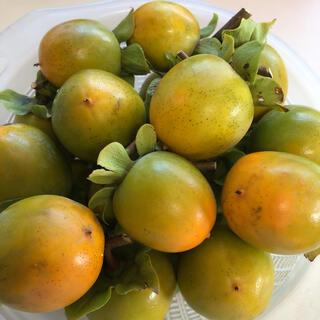 【採りたて】無農薬 渋柿 約5kg以上 信州産 干し柿用(フルーツ)