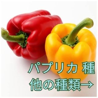 野菜種☆パプリカ☆変更→ほうれん草 つるなしいんげん スイスチャード ビーツ (野菜)