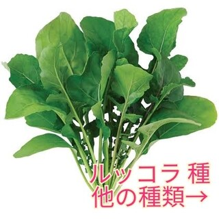 野菜種☆ルッコラ☆変更→ほうれん草 ビーツ つるむらさき カラフル人参 春菊(野菜)