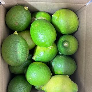 天草産 グリーンレモン 1kg(フルーツ)
