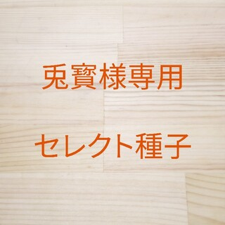 兎寳様専用 セレクト種子 10袋(野菜)