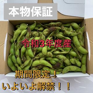 【期間限定】【送料無料】丹波篠山産 黒枝豆 約800g