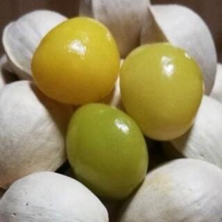 【大粒】純天然 無農薬 無漂白 銀杏1000g以上