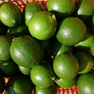 季節限定🍀グリーンレモン🍀完全無農薬🍀2.5㎏(画像は28個入り)(野菜)