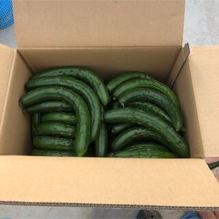 きゅうり 曲がり 4kg  (野菜)