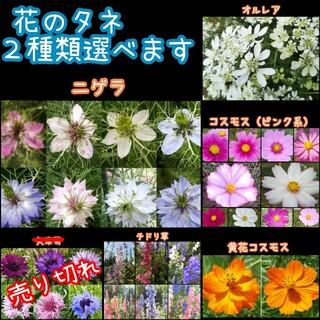 花のタネ2種類