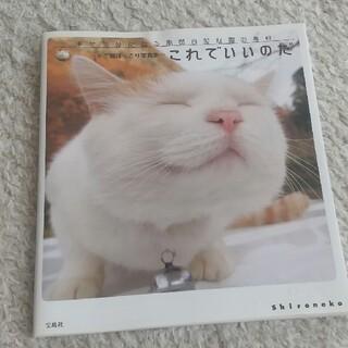 タカラジマシャ(宝島社)のこれでいいのだ 幸せ気分になる泰然自若な猫の毎日(住まい/暮らし/子育て)