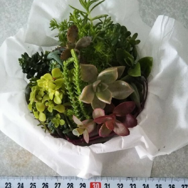 多肉植物 詰合せ 品種色々です ハンドメイドのフラワー/ガーデン(プランター)の商品写真