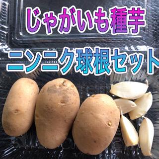 ジャガイモ種芋とニンニク球根セット(その他)