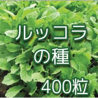 ルッコラの種400粒(その他)