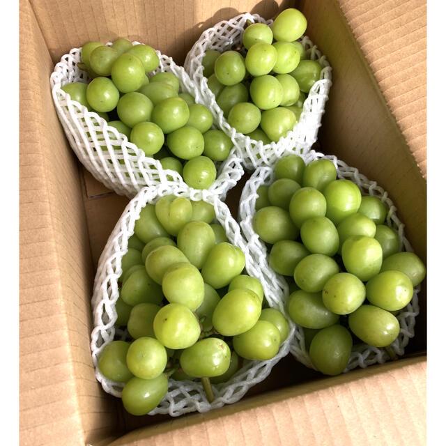 長野県産シャインマスカット 2キロ(3房〜4房入り) 食品/飲料/酒の食品(フルーツ)の商品写真