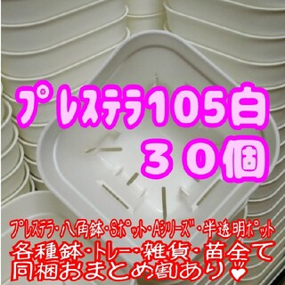 【スリット鉢】プレステラ105白30個 多肉植物 プラ鉢