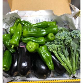 野菜詰め合わせ ナス、ピーマン、スティックセニョール(野菜)