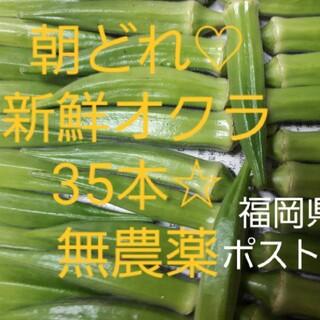 オクラ(おくら)35本 ポスト投函 農薬不使用