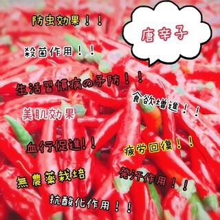 無農薬!唐辛子 80g (野菜)