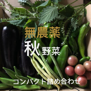 無農薬 秋野菜 コンパクト 詰め合わせ 採りたてセット(野菜)