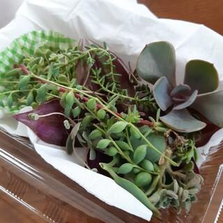 多肉植物 寄せ植え   送料込み(プランター)