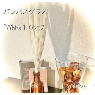 【大人気】パンパスグラス 白10本入 ドライフラワー 送料込み テールリード