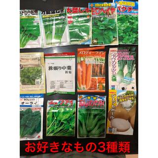 野菜の種 3種セット(野菜)